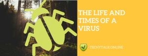 The Life and Times of a Virus