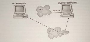 Virus spreading from an infected system using the network or removable media