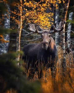 Finnish Photographer Shows The Beauty Of Fairy Forests In Finland 17